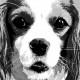 06-idea-regalo-natale-cuccioli-animali-domestici-migliori-amici-cani-gatti-quadri-dipinti-a-mano-ritratti-moderni-pop-art-arredamento