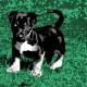 07-idea-regalo-natale-cuccioli-animali-domestici-migliori-amici-cani-gatti-quadri-dipinti-a-mano-ritratti-moderni-pop-art-arredamento