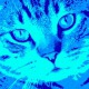09-idea-regalo-natale-cuccioli-animali-domestici-migliori-amici-cani-gatti-quadri-dipinti-a-mano-ritratti-moderni-pop-art-arredamento