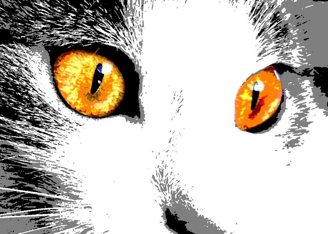 Amanti degli animali for Quadri foto